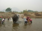 Washing Elephants