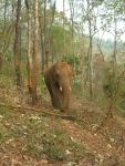 """Elephant Heaven"", ENP's wilderness sanctuary"