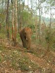 """""""Elephant Heaven"""", ENP's wilderness sanctuary"""