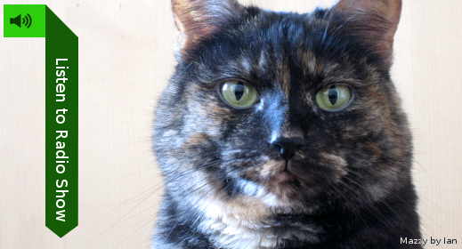 Listen to the show! (pic: Tortoiseshell cat)